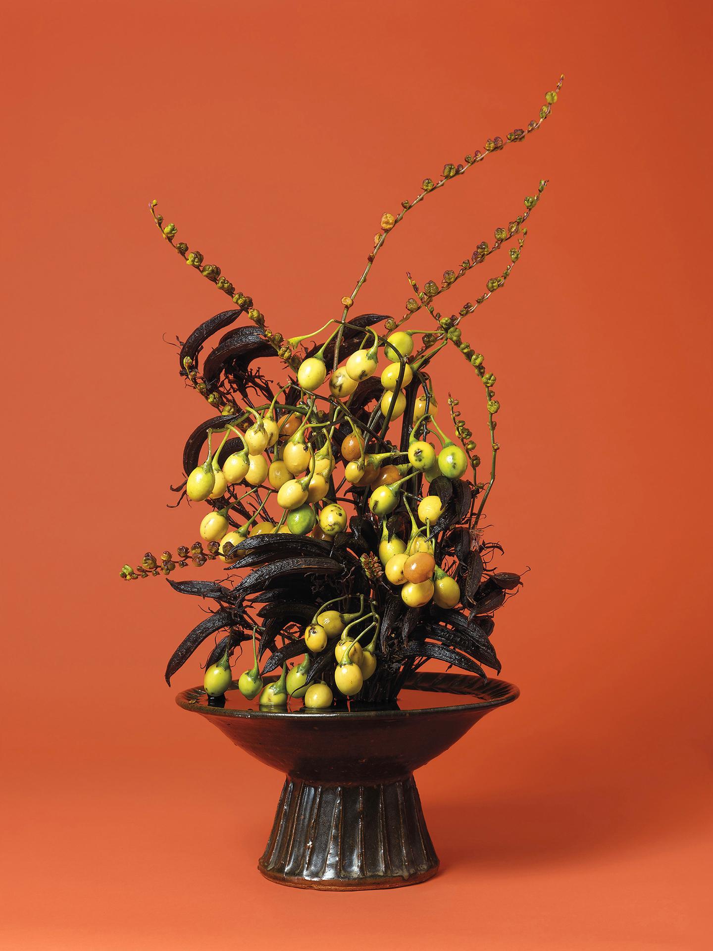 Ann Shelton 10. The Courtesan, Poroporo (Solanum sp.) ©Ann Sheltonsm1