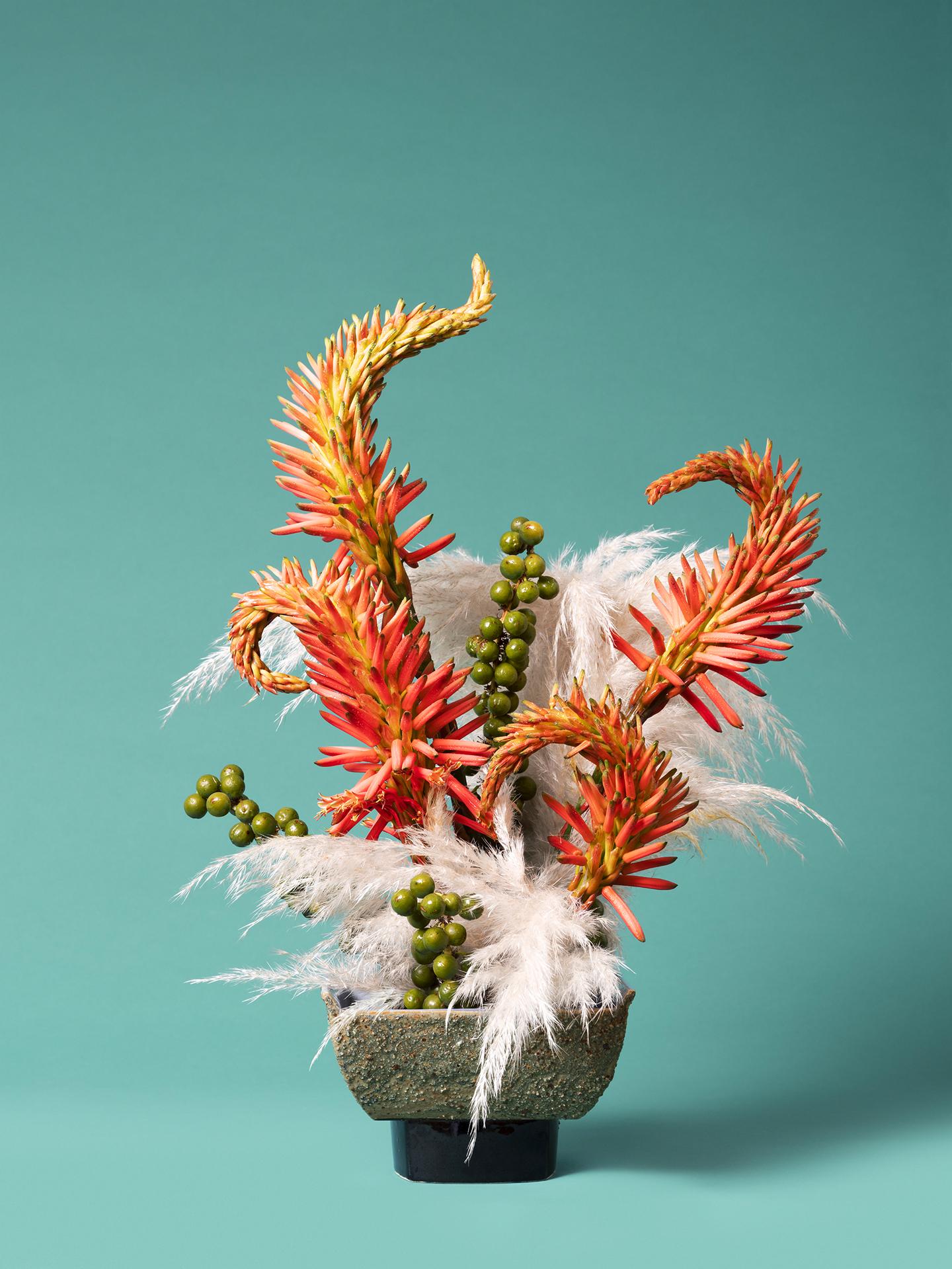 Ann Shelton 5. The Red Head, Toe Toe (Austroderia sp.) ©Ann Sheltonsm2